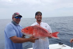Fish of Port Canaveral