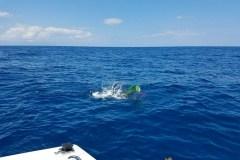 Port Canaveral Fishing Charter Information Mahi